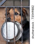 hungry dog with bowl locked in... | Shutterstock . vector #73549882