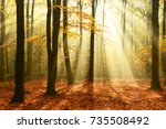autumn forest | Shutterstock . vector #735508492