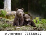 young brown bear in the forest. ... | Shutterstock . vector #735530632