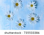 daisies on the table | Shutterstock . vector #735533386