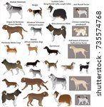 collection of different breeds... | Shutterstock .eps vector #735574768