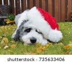 Sweet Puppy Wearing Santa Hat