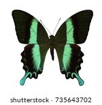 Stock photo butterfly isolated on a white background 735643702