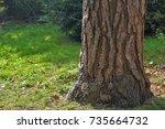 squirrel dispersing behind tree ... | Shutterstock . vector #735664732
