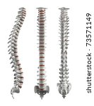 detailed spine with... | Shutterstock . vector #73571149
