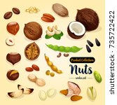 nut  bean and seed vector set... | Shutterstock .eps vector #735722422