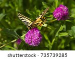 Stock photo butterfly papilio machaon the old world swallowtail on a pink flower in the meadow imago with 735739285