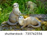 Decorative Mongoose Or Suricat...