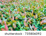 leaf | Shutterstock . vector #735806092