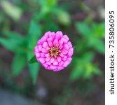 flower | Shutterstock . vector #735806095