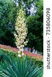 flower | Shutterstock . vector #735806098