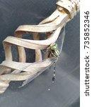 dragonfly | Shutterstock . vector #735852346