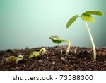 stock image of the small plant... | Shutterstock . vector #73588300