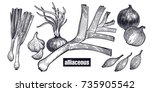 onion  shallot  leek set.... | Shutterstock .eps vector #735905542