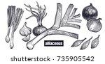 onion  shallot  leek set.... | Shutterstock .eps vector #735905542