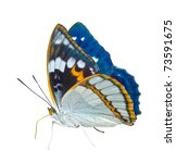 Stock photo a close up of the butterfly apatura schrencki isolated on white 73591675