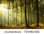 morning in the forest | Shutterstock . vector #735982585
