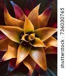 bromelia | Shutterstock . vector #736030765