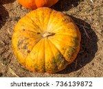 fairytale pumpkin is deeply...   Shutterstock . vector #736139872
