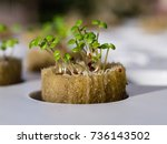 Growing Watercress And Herbs I...