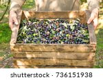 one hand takes  the olives that ... | Shutterstock . vector #736151938