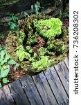 Small photo of Green world new world Bryophytes