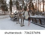 Reindeer Drawn Sleigh In The...