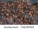 autumn leaves with a tree on... | Shutterstock . vector #736239562