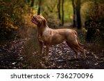 Bordeaux Dog Walking In The...