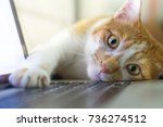 Stock photo cat sleeping over a laptop on wooden desk with sunrise background 736274512