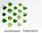 leaves with globe | Shutterstock . vector #736314076