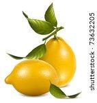 vector. fresh lemons with... | Shutterstock .eps vector #73632205