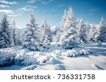 Scenic image of spruces tree....