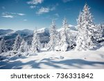 magic image of spruces glowing... | Shutterstock . vector #736331842