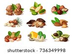 cartoon colorful nuts set with... | Shutterstock .eps vector #736349998