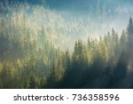 Spruce Forest In Fog On...