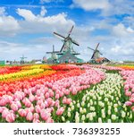 three traditional dutch... | Shutterstock . vector #736393255
