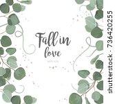eucalyptus silver dollar green... | Shutterstock .eps vector #736420255