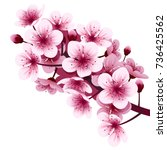 Vector  Cherry Blossom Flower
