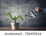 hand of man watering small... | Shutterstock . vector #736455616