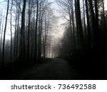 mysterious forest | Shutterstock . vector #736492588