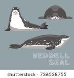 weddell seal cartoon vector... | Shutterstock .eps vector #736538755