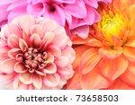 Beautiful Multicolored Dahlias...