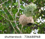 New Yellow Finch Nest In...