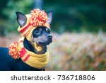 Stock photo little dog in an autumn hat and scarf funny funny puppy theme of autumn cold a dog in clothes 736718806