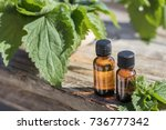stinging nettle essential oil ... | Shutterstock . vector #736777342