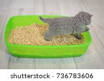 british blue kitten in green... | Shutterstock . vector #736783606