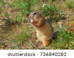 Small photo of gophers eat a piece of bread
