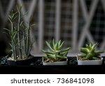 flowers | Shutterstock . vector #736841098