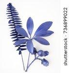 blue leaf design elements.... | Shutterstock . vector #736899022